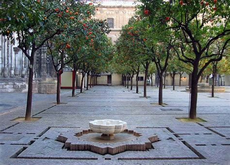 Patio Orange Tree orange tree courtyard of the cathedral of seville