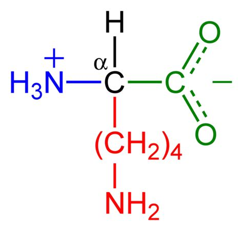 protein zwitterion in zwitter ionic form amino acids show hoteric behavior