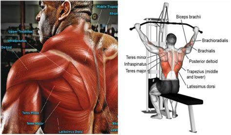 lat pull exercises for a defined back guider