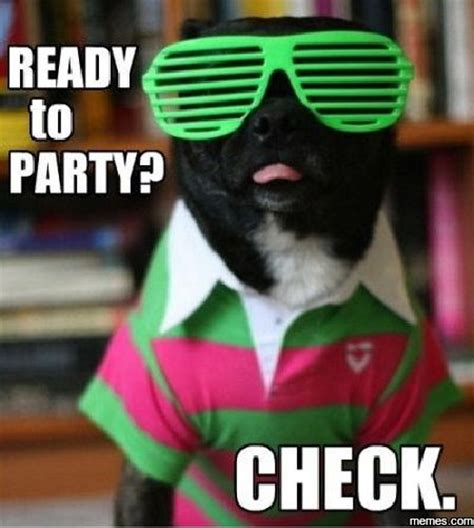 Meme Party - ready to party memes com