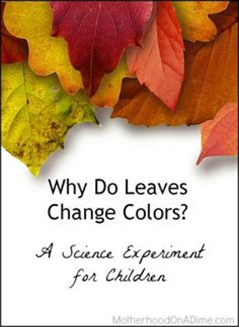 why do leaves change color in the autumn from science bob