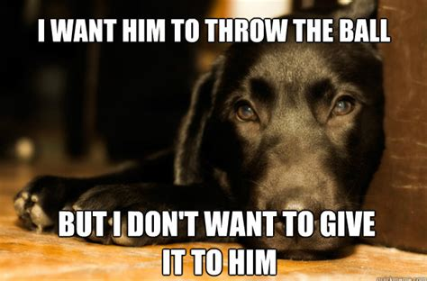 Dog Problems Meme - 10 of the best quot first world dog problems quot meme