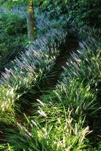 Types Of Garden Paths - erin s art and gardens monkey grass