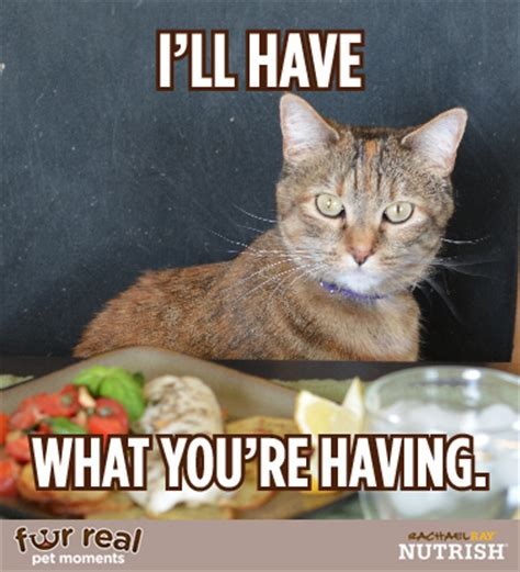 Cat Food Meme - cat begging for food meme pictures to pin on pinterest