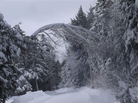 winter scenesnowtreesnorthernmaine maine snow