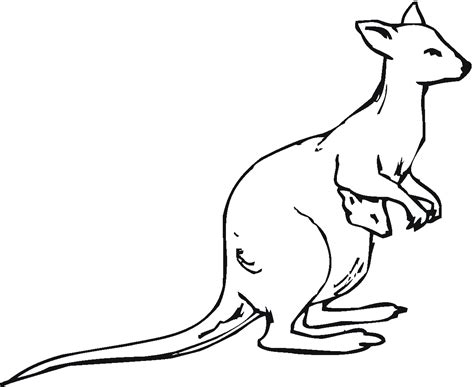 kangaroo face coloring page k is for kangaroo coloring page kangaroo coloring pages