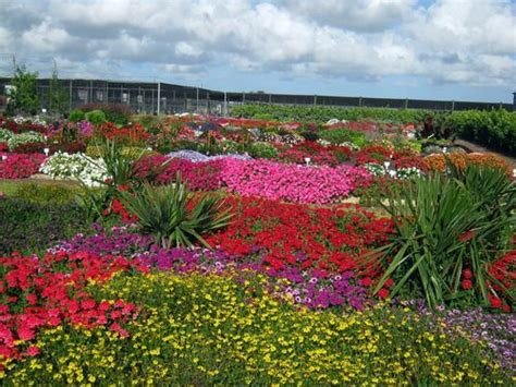 Flower Gardens In Florida Color Your World With New Blooms World Florida And Colors