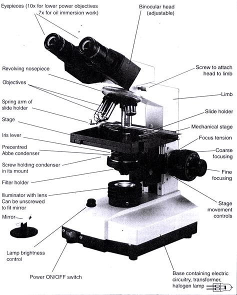 light microscope parts and functions compound microscope parts