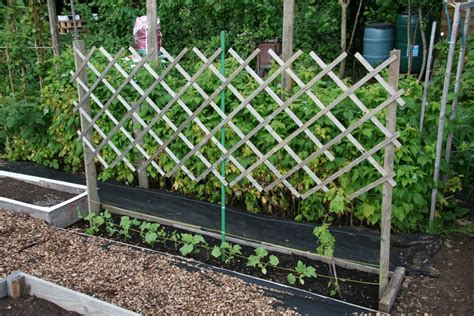 gardening fun our allotments thrifty living