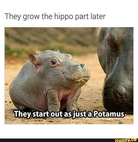 Hippo Memes - hippopotamus ifunny