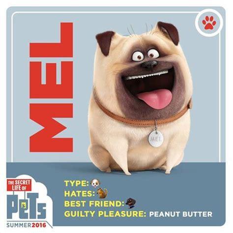 mel the pug meet mel a pug who peanut butter every has a guilty pleasure the secret