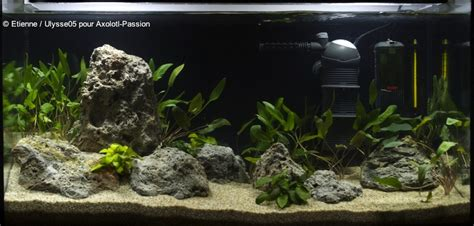 Comment Nettoyer Les Decors D Aquarium by D 233 Coration Aquarium Axolotl