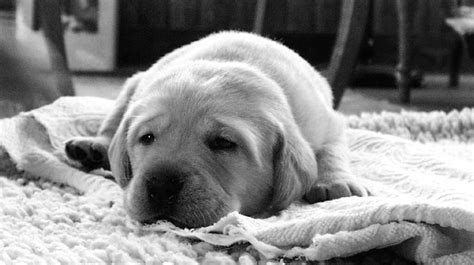 how to house your puppy how to help your adapt to a new house