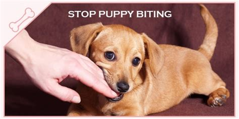 how do puppies bite puppy biting what can i do new owners