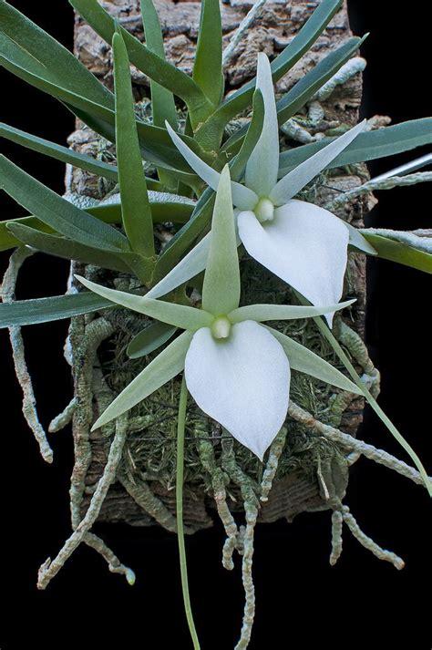 garden orchids and roses auf pinterest orchideen dfte 1881 besten orquidea no tronco bilder auf pinterest
