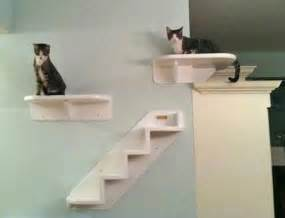 cat wall shelves climbing new cat wall climbing components from vertical cat