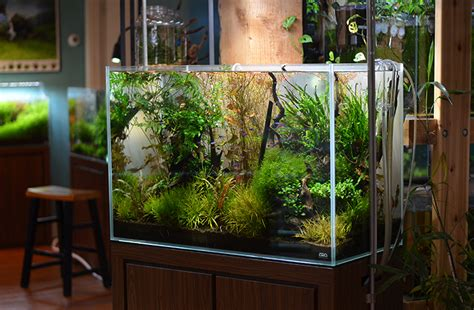 biggest online plants store o 249 acheter where to buy beautiful aquariums for living