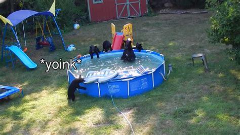 Bears Backyard Pool Bears Invade A New Jersey Backyard A Pool And
