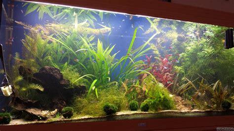 360 Liter Aquarium juwel 360 liter flowgrow aquascape aquarien datenbank