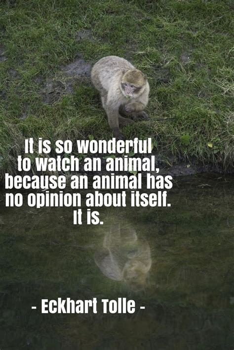 animal quotes quotes about animal quotesgram