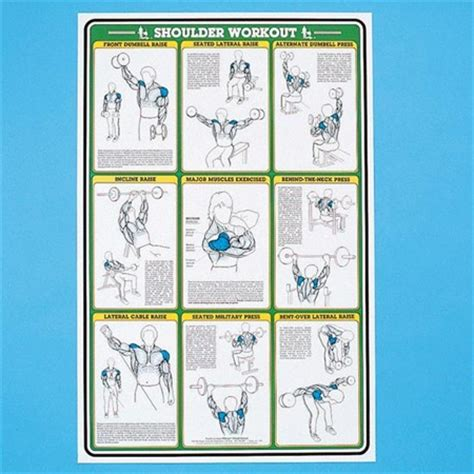 weight bench exercises poster self instruction weight training poster shoulder
