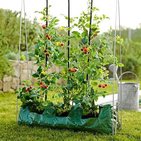 how to grow tomatoes williams sonoma taste