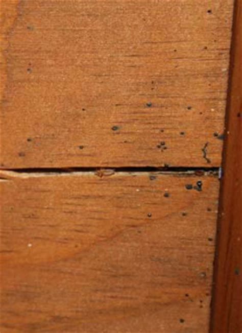 bed bugs headboard bed bug information for pest management professionals