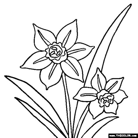 narcissus flower coloring page free online coloring pages thecolor