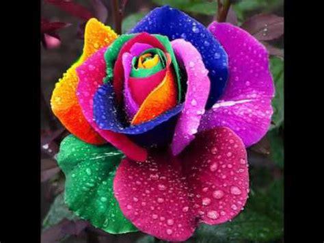 imagenes gratis flores exoticas lindas flores ex 243 ticas youtube