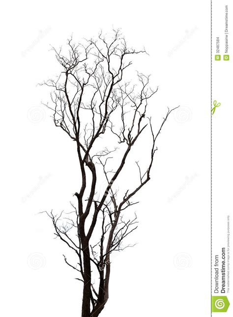 silhouette tree stock photo image of wooden nature