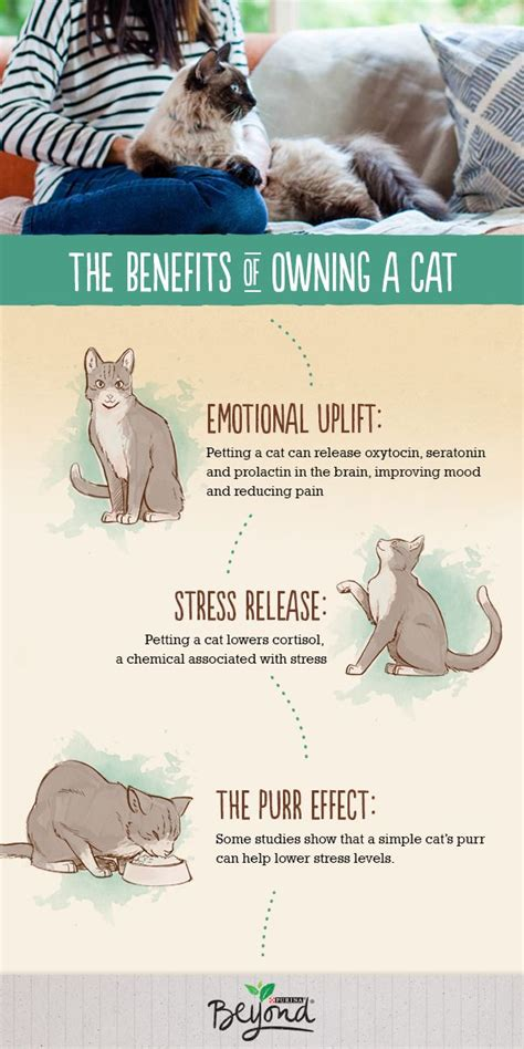 Khimar Simpel Mutiara Non Pet 17 best images about pets 101 on pets cat food and health