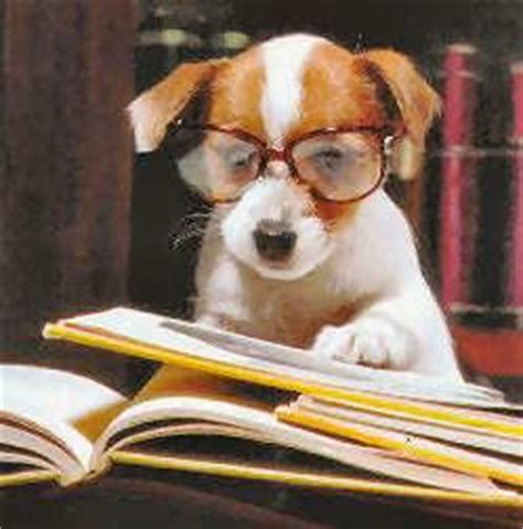 puppy studying cutegreggator dogs in glasses animal and doggies