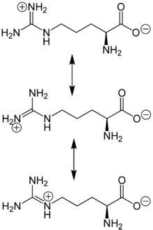 Arginin – Wikipedia L Arginine Structure