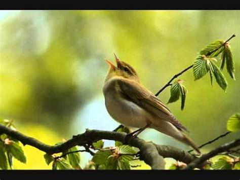 bird songs 10 hours youtube