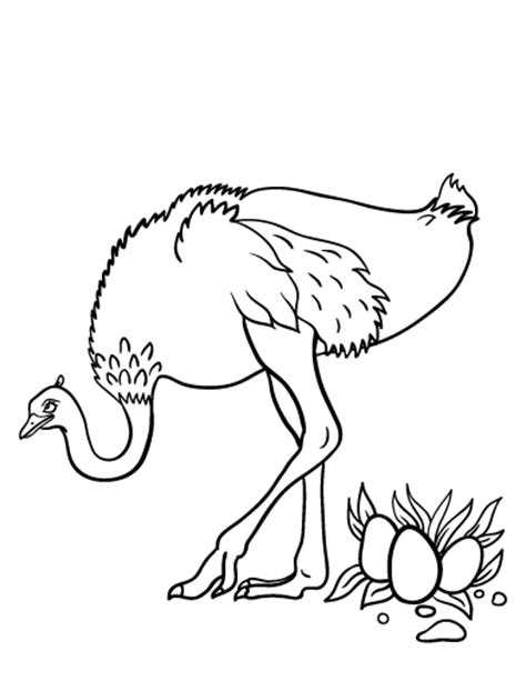 Free Printables At Museprintables Com Ostrich Coloring Page