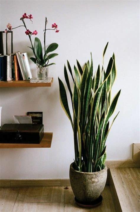 Beau Plante D Interieur Depolluante #1: plante-d-intérieur-pour-decorer-chez-vous-avec-plante-d-interieur-depolluante-jolie-idee.jpg