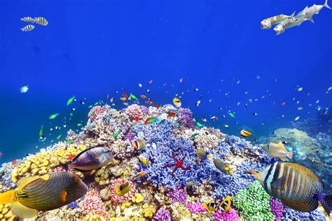 Finding Great Finding Nemo Snorkel In The Great Barrier Reef Smartertravel