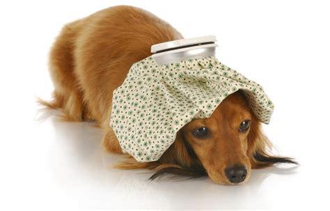 sick puppy symptoms veterinarians seva call