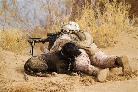war dogs improvised explosive devices ieds detection in