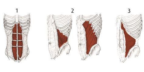 muscolo obliquo interno fai il nostro test sugli addominali melarossa
