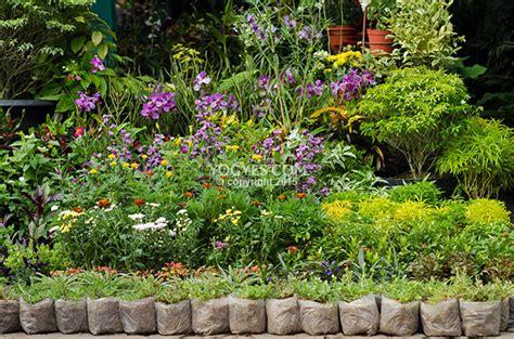 kios bunga  zona tanaman hias yogyakarta animal