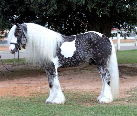 beautiful breeds beautiful breeds weneedfun