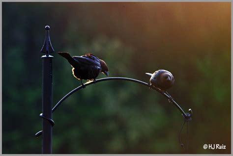 are birds color blind color blind birds h j ruiz avian101