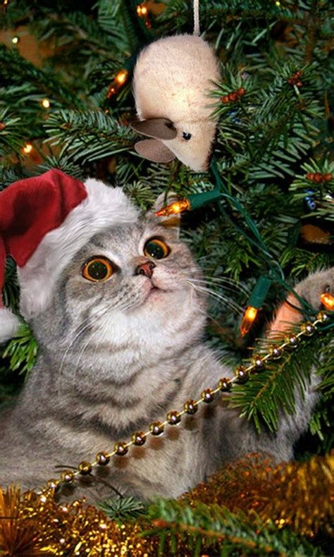 272 best images about christmas cats kittens on