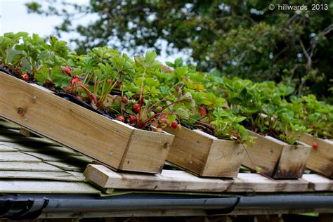 less than growing plants on a shed roof