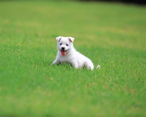 grass puppy puppy in a park puppy on grass lovely puppies outdoor puppy dogs