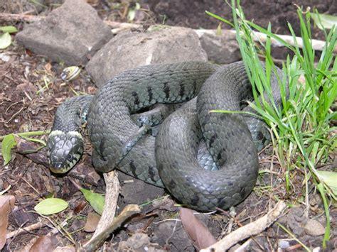 Tiere 187 Schlangen Im Garten
