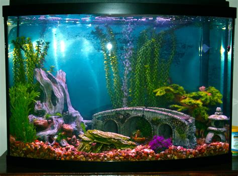 Home Aquarium Decorations by Fish Tank Decorations Google Search Fish Tanks