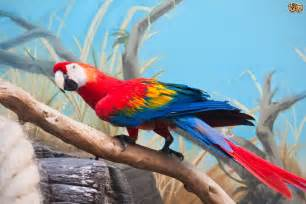 The scarlet macaw pets4homes
