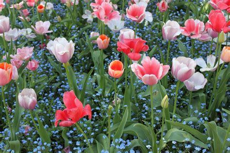 gardens  francebelgium images  pinterest